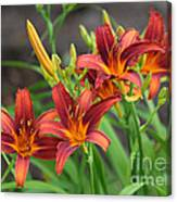 New Daylilies Canvas Print