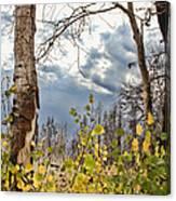 New Generation - Casper Mountain - Casper Wyoming Canvas Print