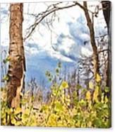 New Generation - Mixed Media - Casper Mountain - Casper Wyoming Canvas Print