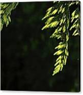 New Growth 25866 Canvas Print