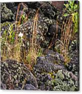 New Growth In A Desolate Area Canvas Print