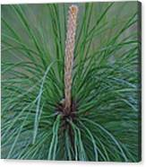 New Growth In Life Canvas Print