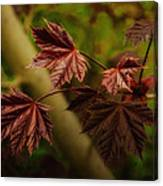 New Leaves For Napanee Canvas Print