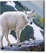 New Life In The High Country Canvas Print