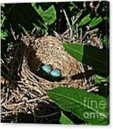 New Life - Robin's Nest Canvas Print
