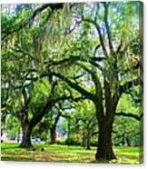 New Orleans City Park - Live Oak Canvas Print