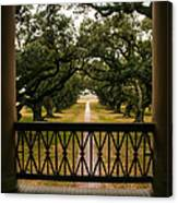 New Orleans Live Oak Canvas Print