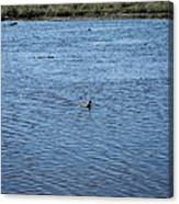 New Orleans - Swamp Boat Ride - 1212108 Canvas Print