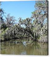 New Orleans - Swamp Boat Ride - 1212133 Canvas Print