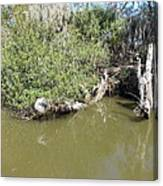New Orleans - Swamp Boat Ride - 1212142 Canvas Print