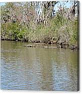New Orleans - Swamp Boat Ride - 1212157 Canvas Print