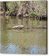 New Orleans - Swamp Boat Ride - 1212159 Canvas Print
