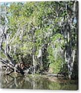 New Orleans - Swamp Boat Ride - 121231 Canvas Print