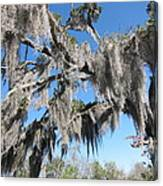 New Orleans - Swamp Boat Ride - 121238 Canvas Print