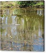 New Orleans - Swamp Boat Ride - 121250 Canvas Print