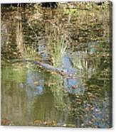 New Orleans - Swamp Boat Ride - 121252 Canvas Print