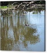 New Orleans - Swamp Boat Ride - 121264 Canvas Print