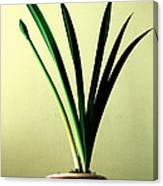Fanned Leaves Of An Amaryllis Canvas Print