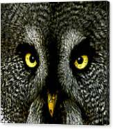 New Photographic Art Print For Sale   Great Grey Owl Canvas Print