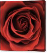 Close Up Heart Of A Red Rose Canvas Print