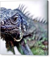 Close Up Beady Eyed Iguana Canvas Print