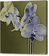 New Photographic Art Print For Sale Orchids 10 Canvas Print