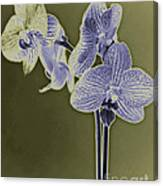 New Photographic Art Print For Sale Orchids 9 Canvas Print