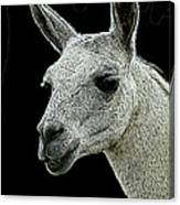 New Photographic Art Print For Sale   Portrait Of  Llama Against Black Canvas Print