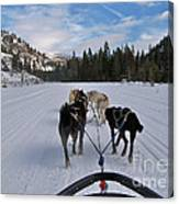 Riding Through The Colorado Snow On A Husky Pulled Sled Canvas Print