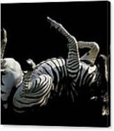 Frolicking Zebra On Black Canvas Print