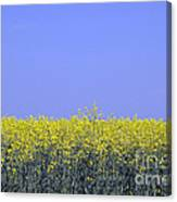 New Photographic Art Print For Sale Yellow English Fields 2 Canvas Print