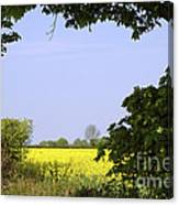 New Photographic Art Print For Sale Yellow English Fields 3 Canvas Print