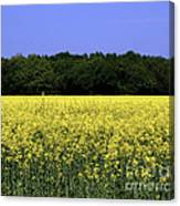 New Photographic Art Print For Sale Yellow English Fields Canvas Print