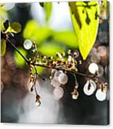 New Rain Canvas Print