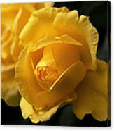 New Yellow Rose Canvas Print