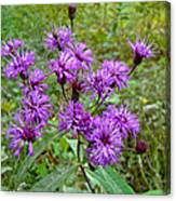 New York Ironweed Wildflower - Vernonia Noveboracensis Canvas Print