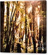 New Zealand Bush Canvas Print