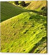 New Zealand Farmland Canvas Print