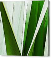 New Zealand Flax Simplified Canvas Print