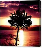 New Zealand Flower Sunset Canvas Print