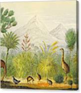 New Zealand Kiwi, Takahe, Extinct Moa Canvas Print