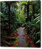 New Zealand Rainforest Canvas Print