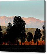 New Zealand Silhouette Canvas Print