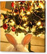 New Zealand White Rabbit Under The Christmas Tree Canvas Print