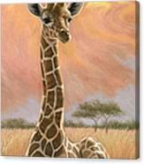Newborn Giraffe Canvas Print