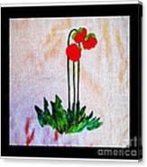 Newfoundland Pitcher Plant Canvas Print