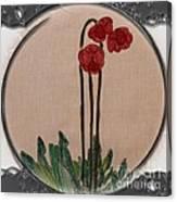 Newfoundland Pitcher Plant - Porthole Vignette Canvas Print