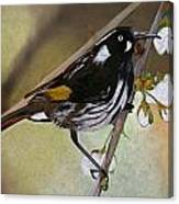 Newholland Honey Eater Canvas Print