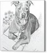Newman Canvas Print