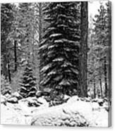 Next Season Christmas Trees Canvas Print